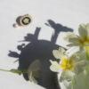 flowers enameked by 10decoart